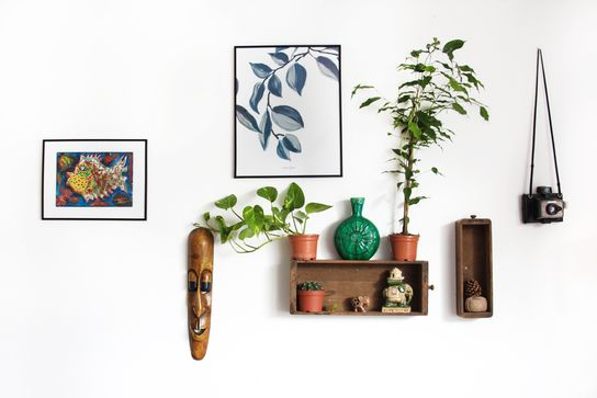 Houseplants to dress house