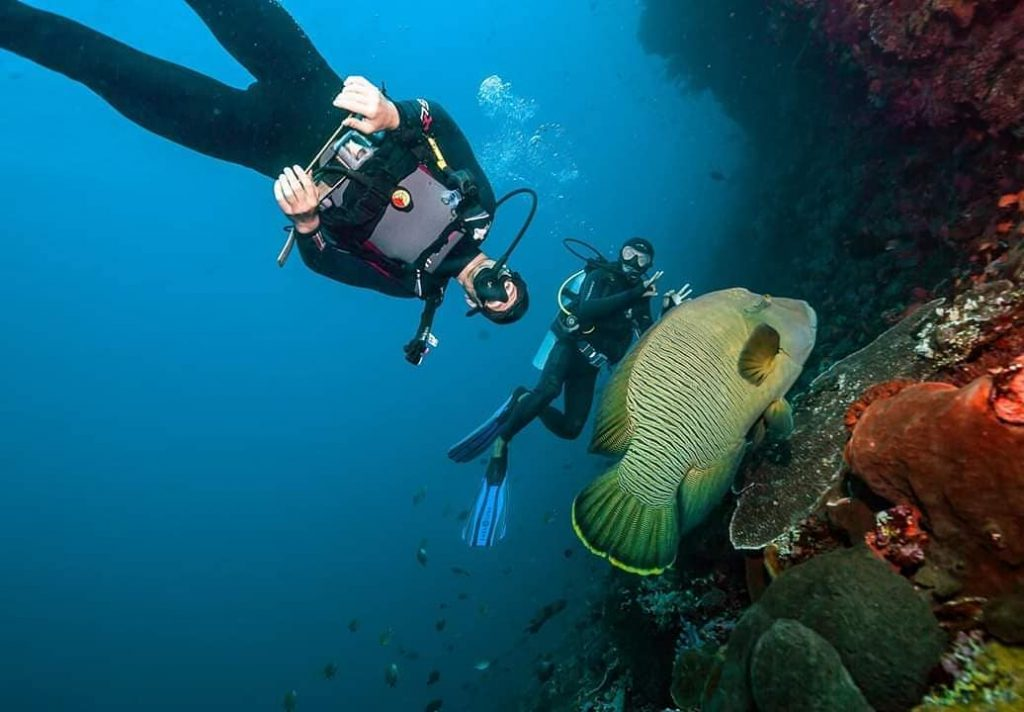 Dive Sessions in Komodo Diving Liveaboard