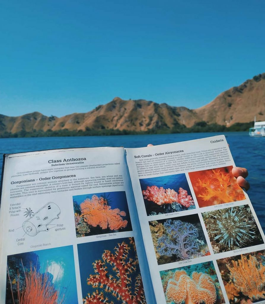Komodo Diving Liveaboard Guide for Awesome Trip