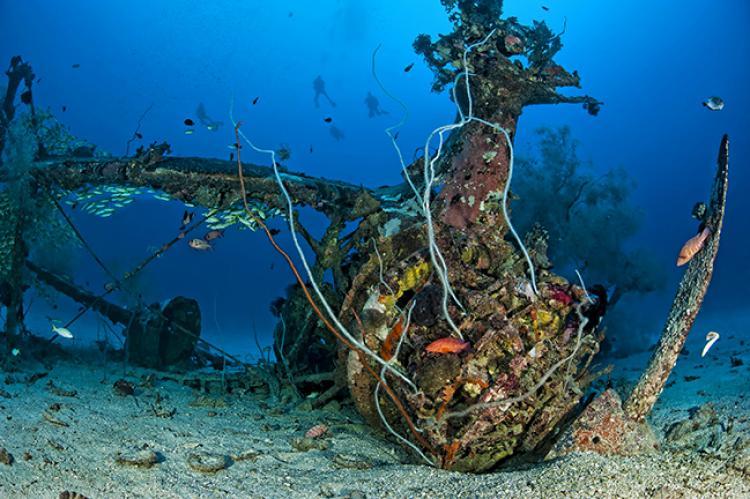 cross wreck raja ampat diving